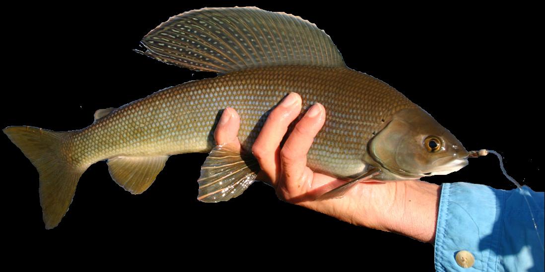 вымь рыбалка хариус